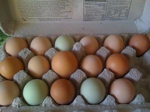 Eggs !